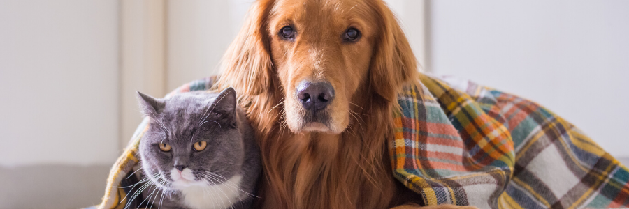Hypoglycemia (Low Blood Sugar) in Pets: Everything You Need to Know